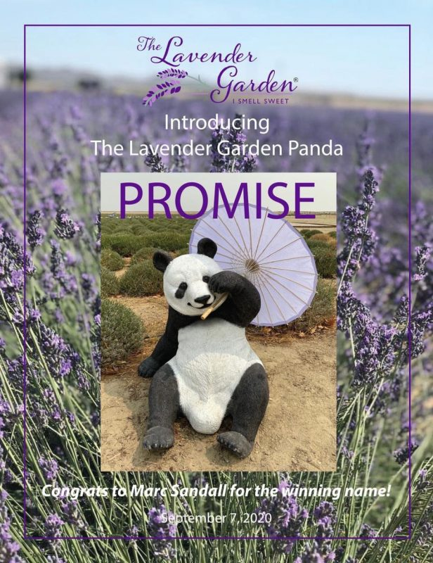 Promise the Panda name the panda contest winner