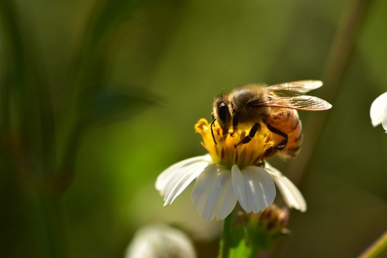 Honeybee Image by Suzanne D. Williams